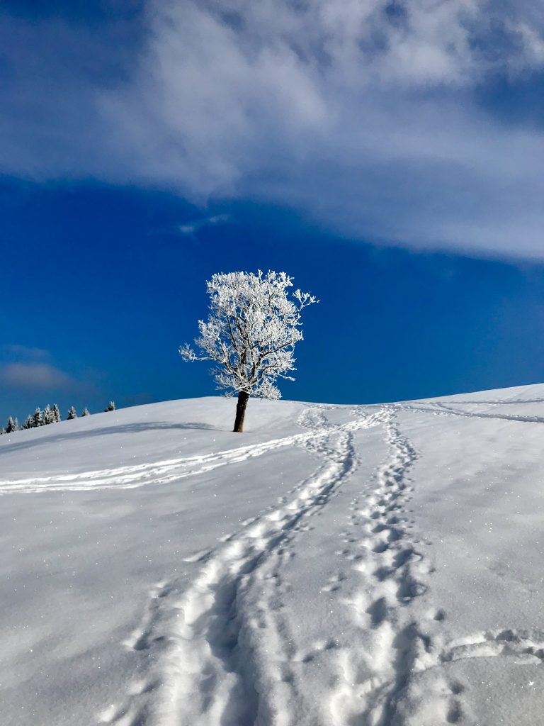 Tourismus Pressereise zu den Winterstars im Chiemgau.